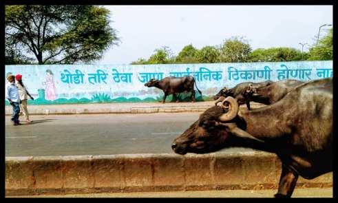 buffalo road